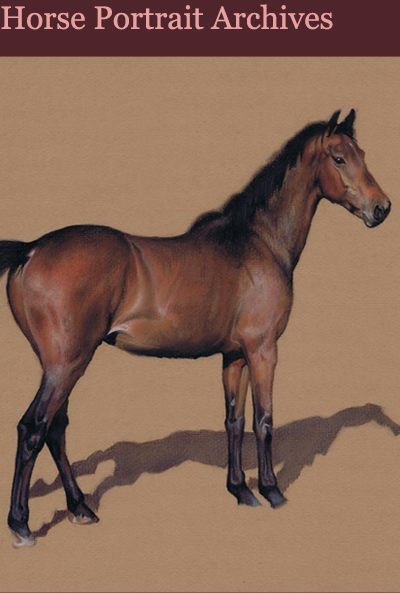 Andrew Howard Art - Portraits of Horses